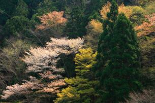白六山の春の写真素材 [FYI03223171]