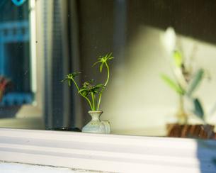 窓越しの花の写真素材 [FYI03223535]