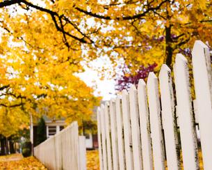 並木の紅葉の写真素材 [FYI03223567]