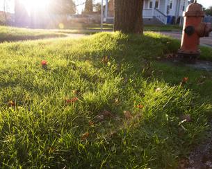 芝に朝陽の写真素材 [FYI03223598]