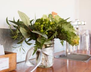 カフェと植物の写真素材 [FYI03223600]
