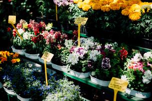 パリの園芸店の店先の写真素材 [FYI03223851]