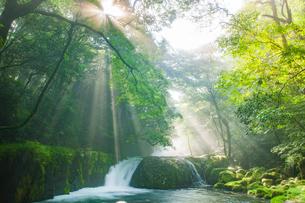 菊池渓谷の光芒の写真素材 [FYI03224051]