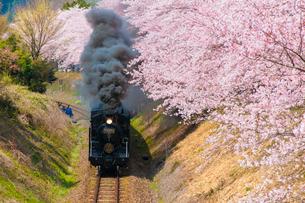 桜並木を行くSL人吉号の写真素材 [FYI03224052]