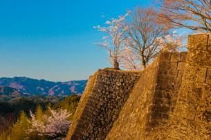 岡城址の桜の写真素材 [FYI03224053]