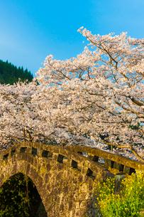 大窪橋の桜の写真素材 [FYI03224055]