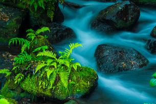白糸の滝の渓流の写真素材 [FYI03224067]