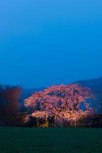 宝珠寺のヒメシダサクラの写真素材 [FYI03224076]