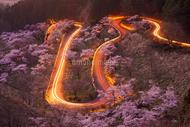 高森峠千本桜の写真素材 [FYI03224087]