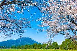 夷守岳を望む桜の写真素材 [FYI03224088]