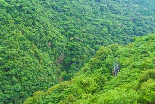 綾の照葉樹林の写真素材 [FYI03224091]