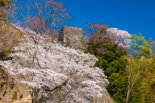 岡城址の桜の写真素材 [FYI03224092]