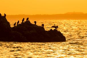 志賀島の朝日の中の海鵜の写真素材 [FYI03224097]