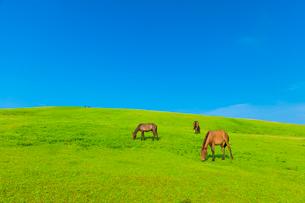 都井岬の御崎馬の写真素材 [FYI03224109]