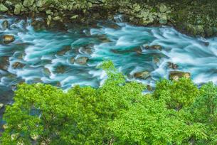綾町の照葉樹林の写真素材 [FYI03224111]