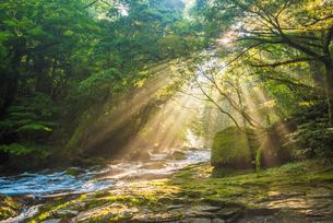 菊池渓谷の光芒の写真素材 [FYI03224116]