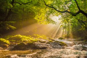 菊池渓谷の光芒の写真素材 [FYI03224117]