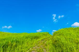 青空の草原の写真素材 [FYI03224125]