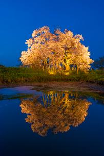 浅井の一本桜の写真素材 [FYI03224130]