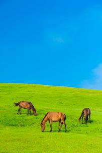都井岬の御崎馬の写真素材 [FYI03224132]