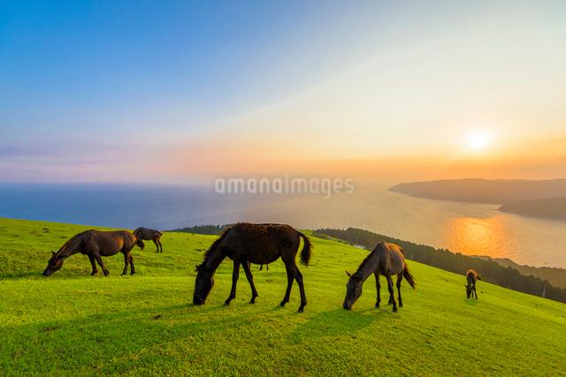 都井岬の御崎馬の写真素材 [FYI03224135]