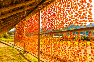 大和町の干し柿の写真素材 [FYI03224145]