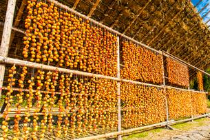 大和町の干し柿の写真素材 [FYI03224146]