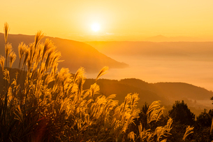 阿蘇の雲海とすすきの写真素材 [FYI03224165]