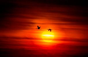 朝日と鶴の写真素材 [FYI03224172]
