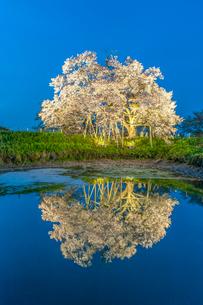 浅井の一本桜の写真素材 [FYI03224176]