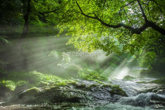 菊池渓谷の光芒の写真素材 [FYI03224195]