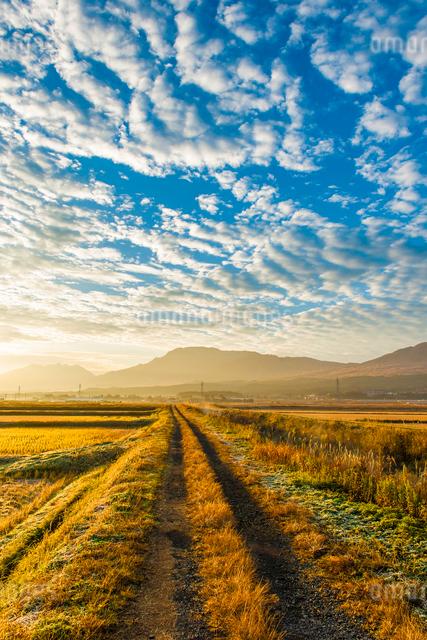 阿蘇のうろこ雲の写真素材 [FYI03224212]