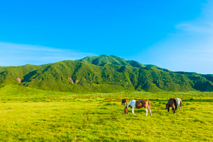 阿蘇草千里ヶ浜の馬の写真素材 [FYI03224222]