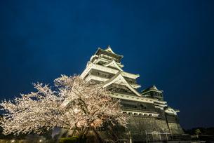 夜桜の熊本城の写真素材 [FYI03224231]