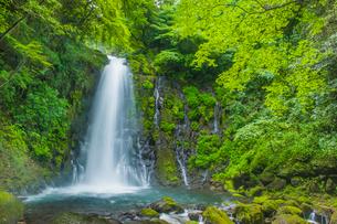 白糸の滝の写真素材 [FYI03224278]