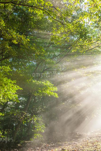 霧島の光芒の写真素材 [FYI03224282]