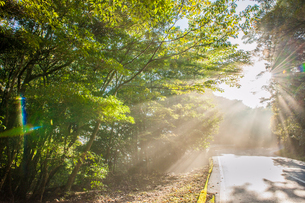 霧島の光芒の写真素材 [FYI03224286]