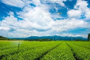 霧島茶畑2の写真素材 [FYI03224307]