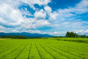 霧島茶畑1の写真素材 [FYI03224310]