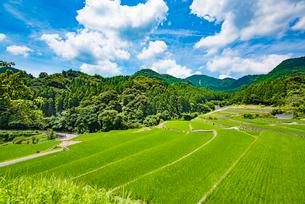 竹地区の棚田2の写真素材 [FYI03224348]