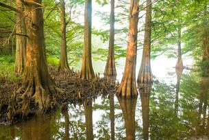 篠栗九大の森3の写真素材 [FYI03224352]