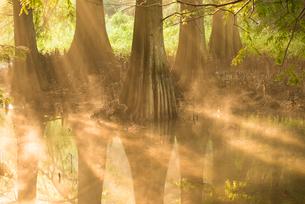 篠栗九大の森1の写真素材 [FYI03224357]