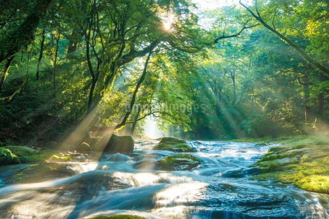 菊池渓谷の光芒の写真素材 [FYI03224419]