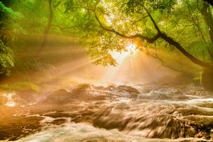 菊池渓谷の光芒の写真素材 [FYI03224425]