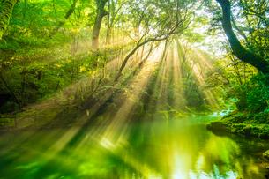 菊池渓谷の光芒の写真素材 [FYI03224428]