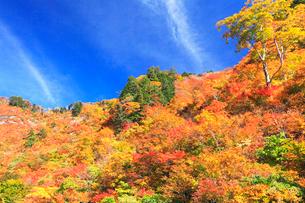 紅葉の山と秋の空の写真素材 [FYI03224629]