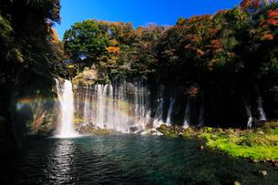 白糸の滝に虹とカモと紅葉の写真素材 [FYI03224638]