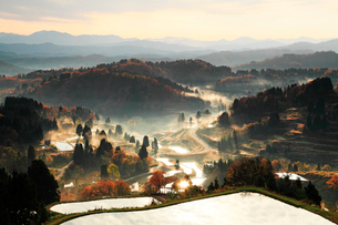 秋の棚田と紅葉の木立に朝もやの写真素材 [FYI03224659]