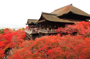 京都清水寺 本堂舞台の写真素材 [FYI03224672]