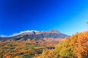 紅葉と快晴の御嶽山に噴煙の写真素材 [FYI03224686]